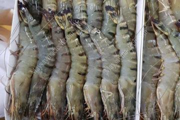 Sấy thăng hoa tôm sú, sản phẩm mới cho thị trường hải sản sấy khô