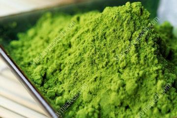 Cách làm bột matcha trà xanh cho chất lượng tốt, màu xanh đẹp
