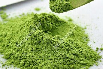 Dịch vụ sấy lá trà xanh làm bột matcha, đảm bảo giữ màu xanh tự nhiên