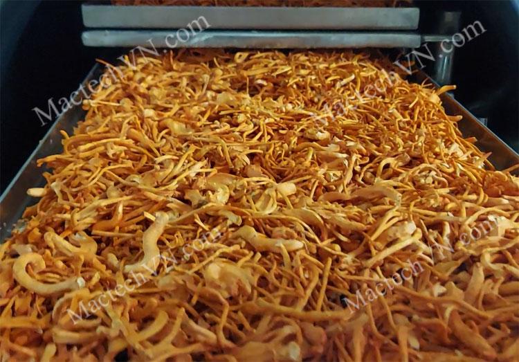 Cách sấy khô nấm đông trùng hạ thảo để giữ màu đẹp, nấm căng phồng và bảo toàn dinh dưỡng